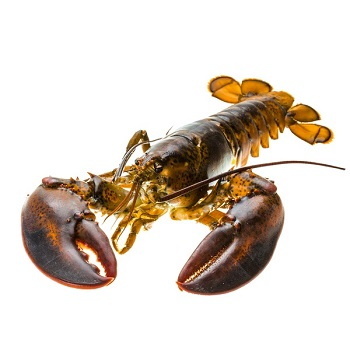 Lobsters (Live and Frozen)
