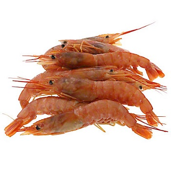 Red and HOSO Shrimps